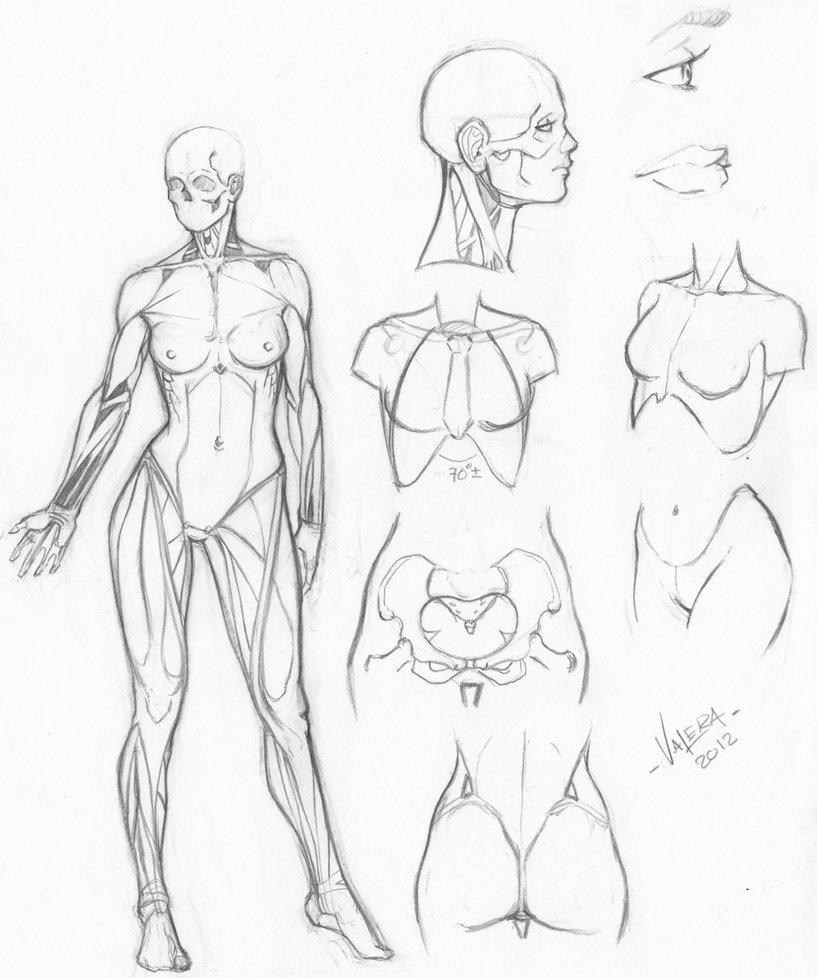 817x978 Random Anatomy Sketches 6 By Rv1994