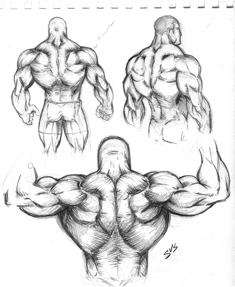 800x977 Muscular Back Study 01 By Spacehater