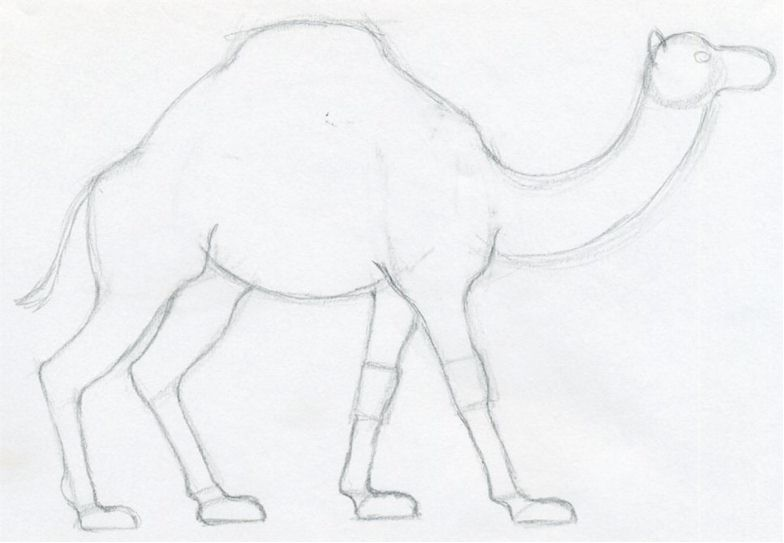 784x543 How To Draw A Camel, Simple, Quick In Color Pencil.
