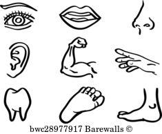 235x194 34,557 Human Body Parts Posters And Art Prints Barewalls