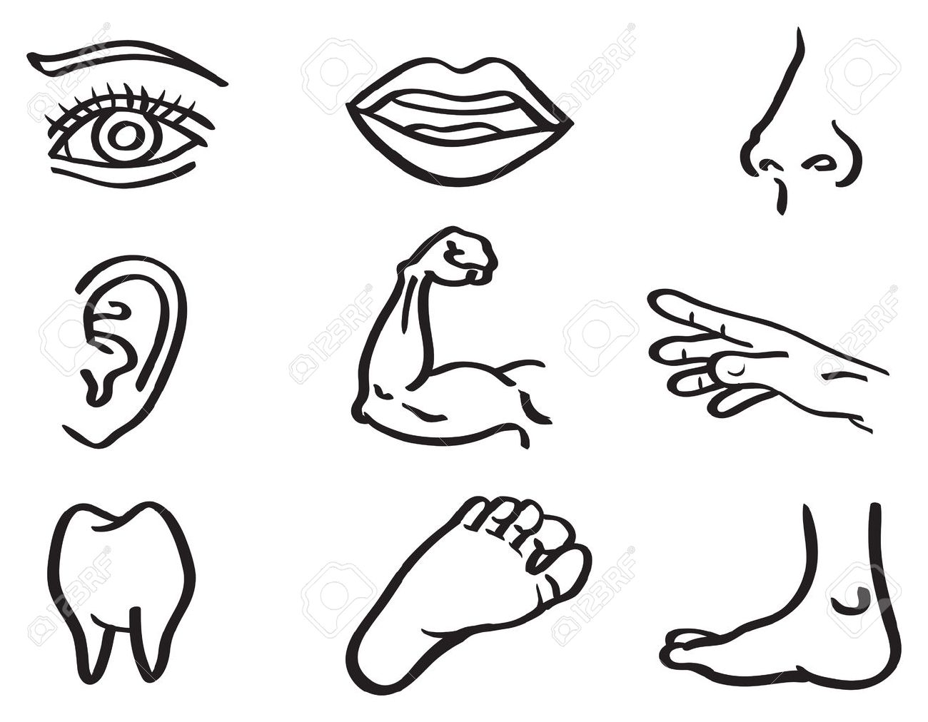 1300x1012 Vector Illustration Of Human Body Parts, Eye, Mouth, Nose, Ear