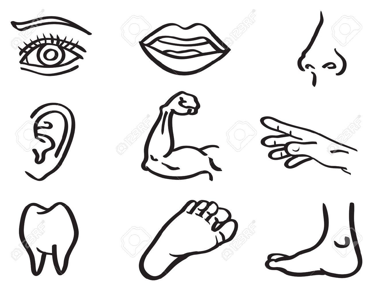 body parts drawing at getdrawings