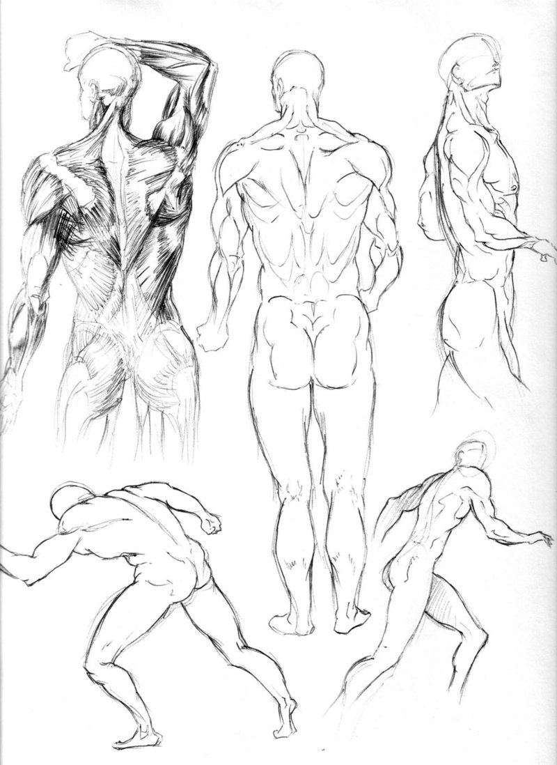 800x1098 Figure Drawing Studies