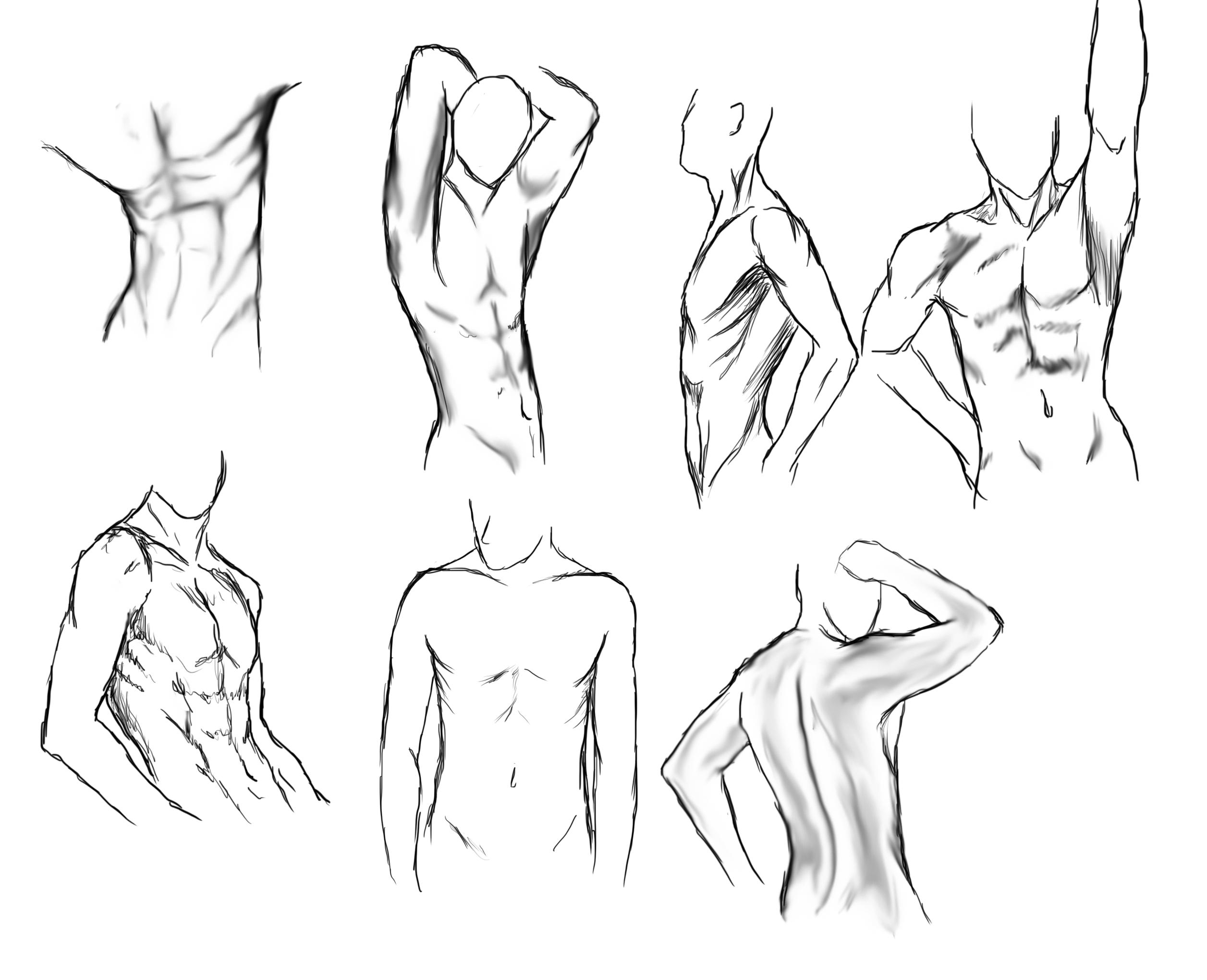 2513x2040 Body Study Ann Tomy