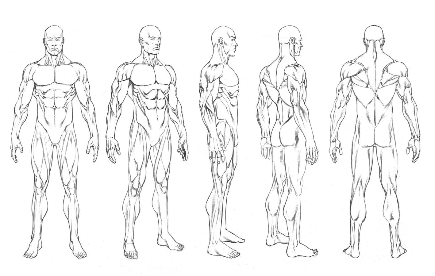 1418x900 Pictures Human Body Drawing Template,