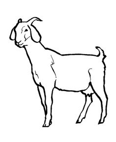 236x288 Best Photos Of Boer Goat Coloring Pages Printable