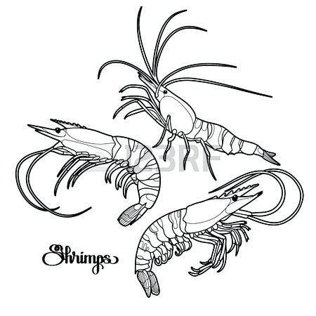450x450 Crawfish Coloring Page Click To See Printable Version Of Crayfish