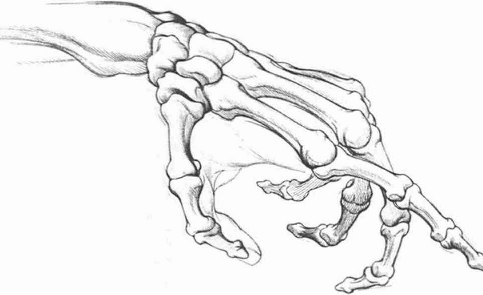 Bone Drawing At Getdrawings Com