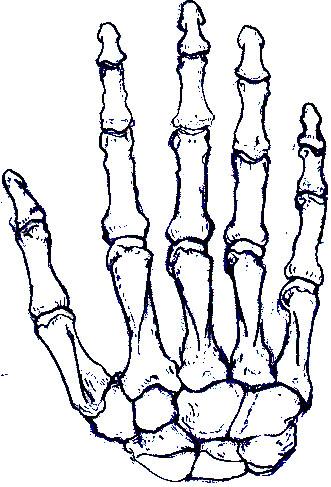 331x487 Skeleton Hand By Ladyham Pie