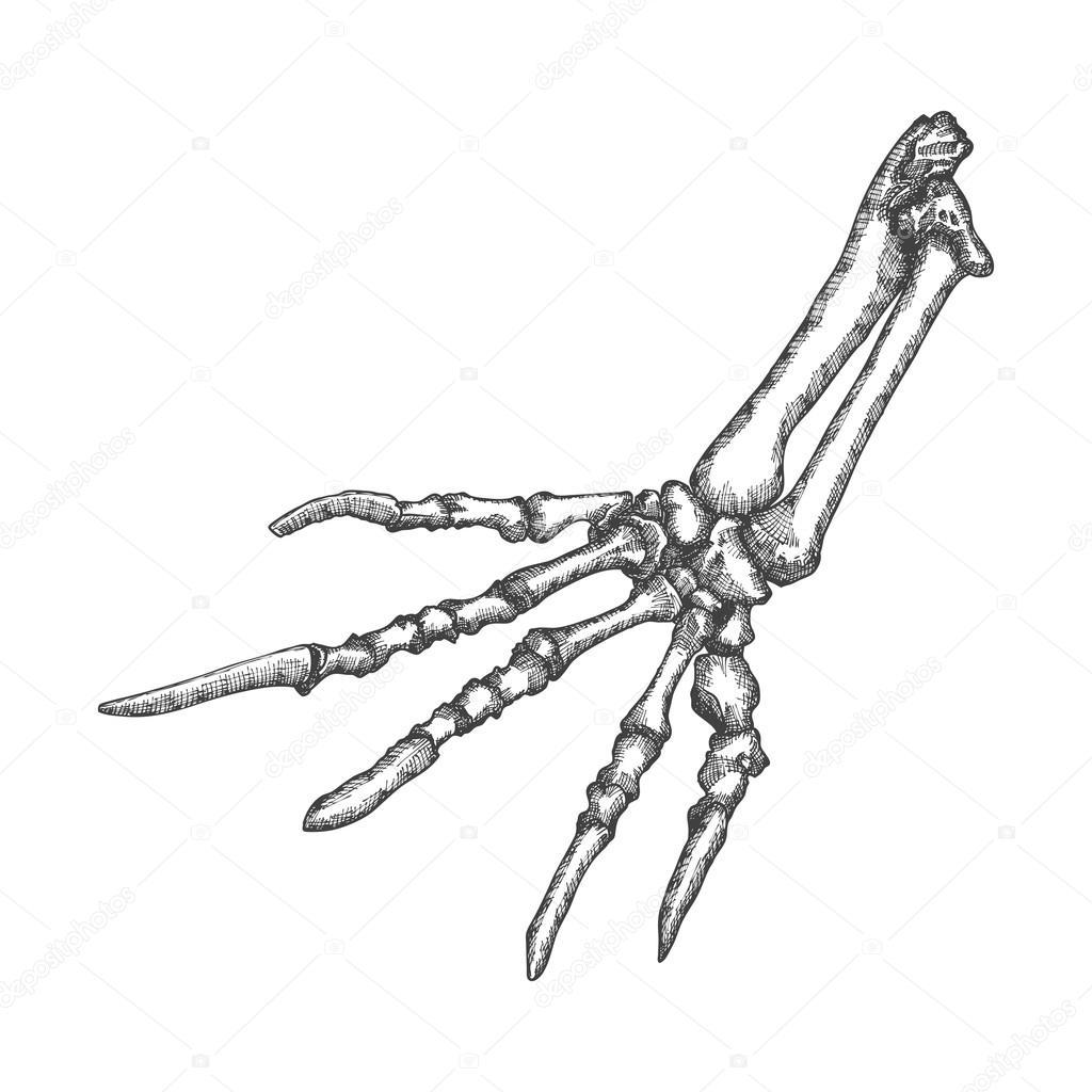 1024x1024 Stylized Drawing Lizard Bones Stock Vector Goldenshrimp