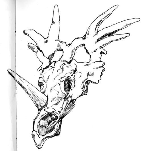 500x530 Dinosaur Bones Drawing Clipart Panda