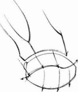 269x316 Anatomyand Structure