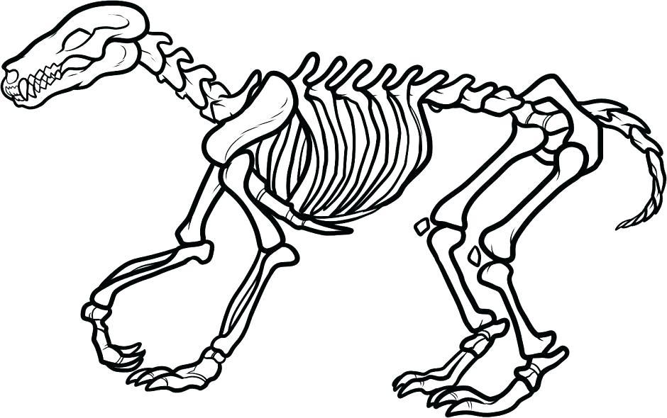 940x590 Bones Clipart Stegosaurus Many Interesting Cliparts