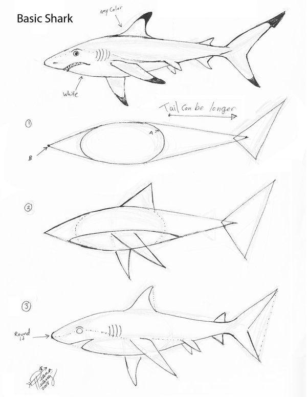 600x776 Draw a basic shark by diana