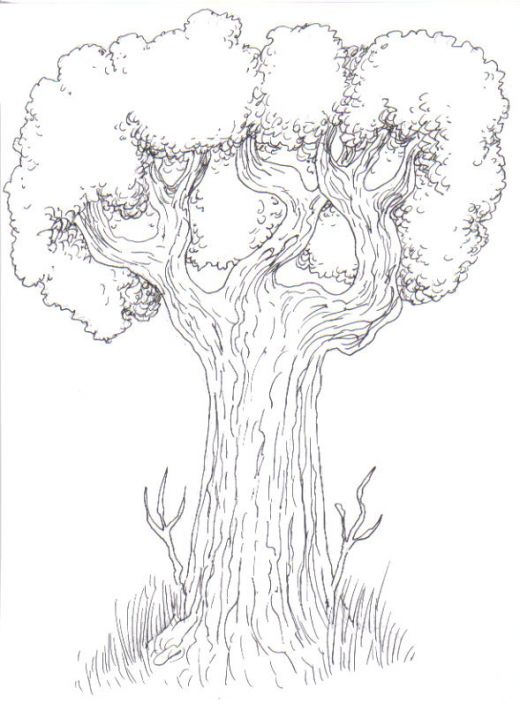 520x704 Drawing Trees How To Draw A Tree Step By Step Drawing Trees