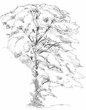292x373 53 Best How To Draw Realistic Trees, Plants, Bushes And Rocks