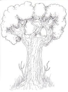 236x319 Tree Drawing With Branches Tree Drawing With Branches How