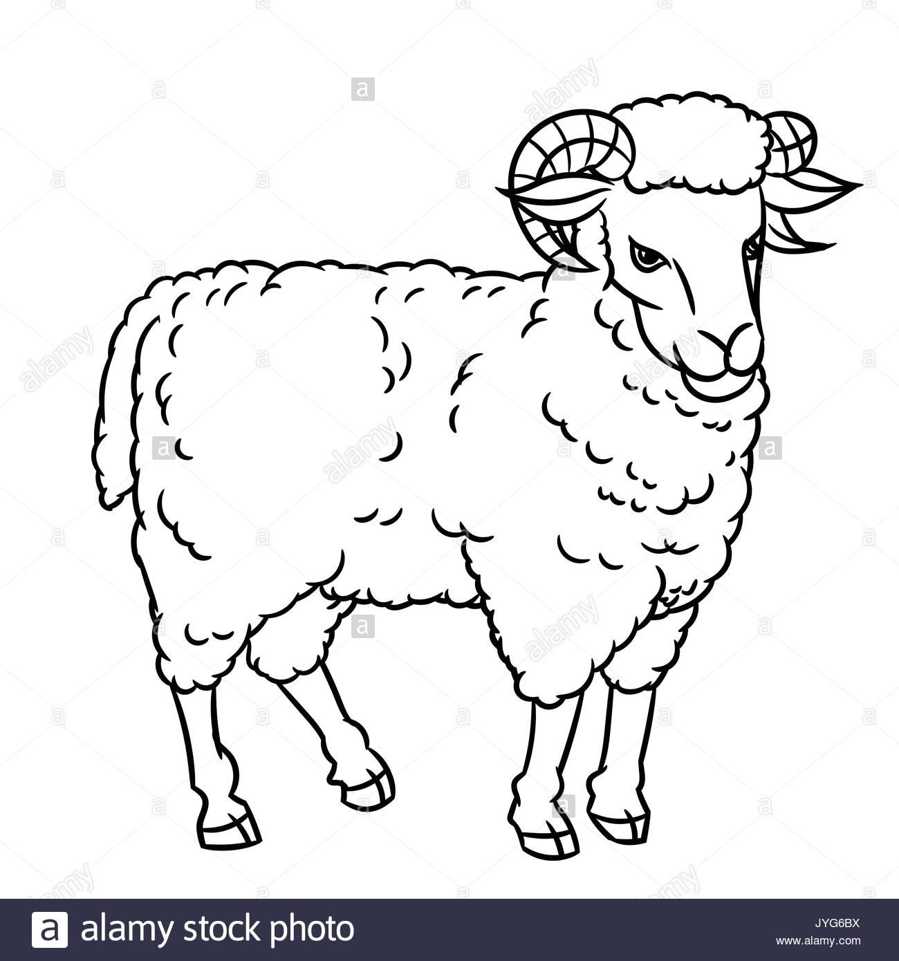 1300x1390 Hand Drawing Sheep. Farm Animals Set. Sketch Graphic Style. Design