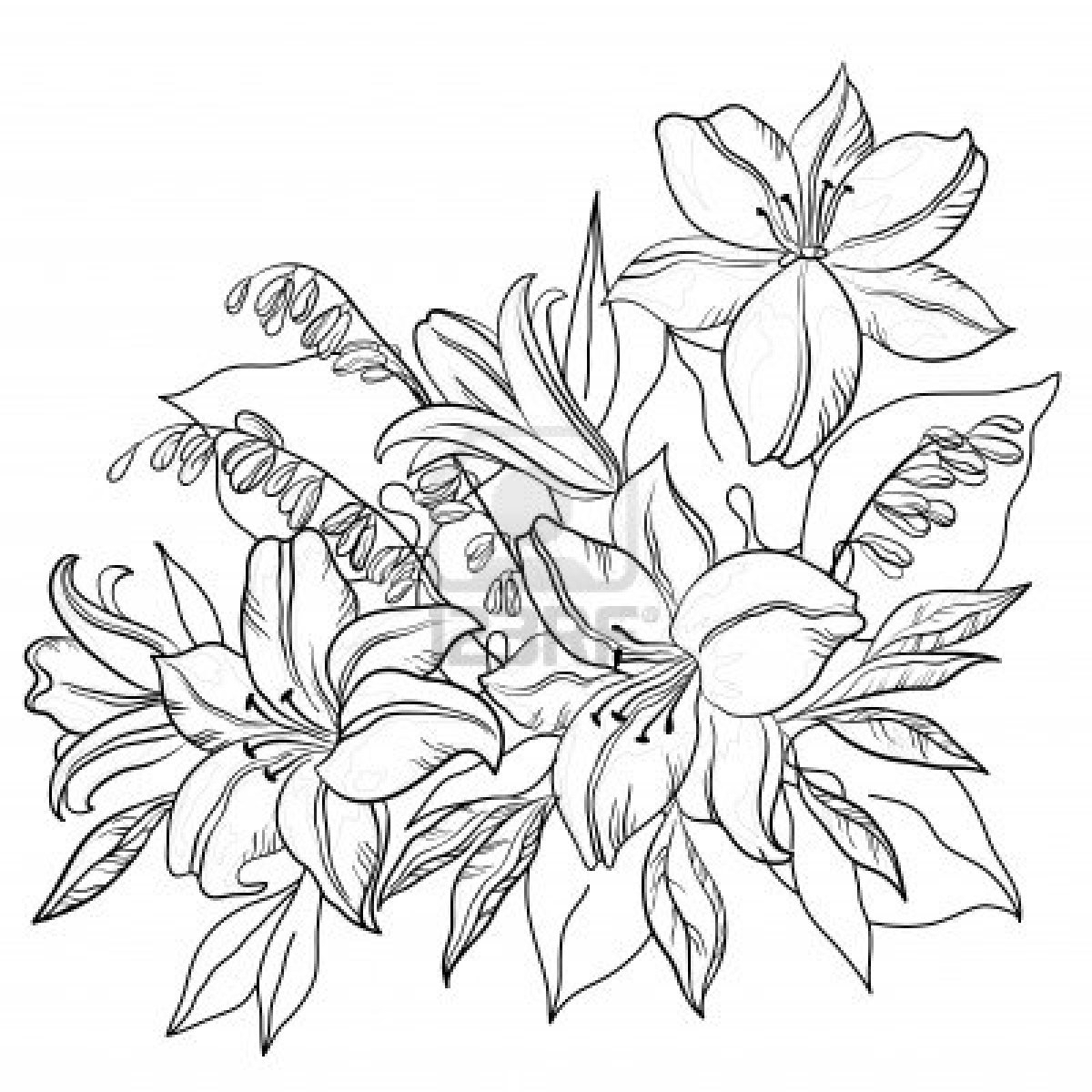 1200x1200 Outline Drawing Of Flowers Lily Flower Drawing Outline Tattoos