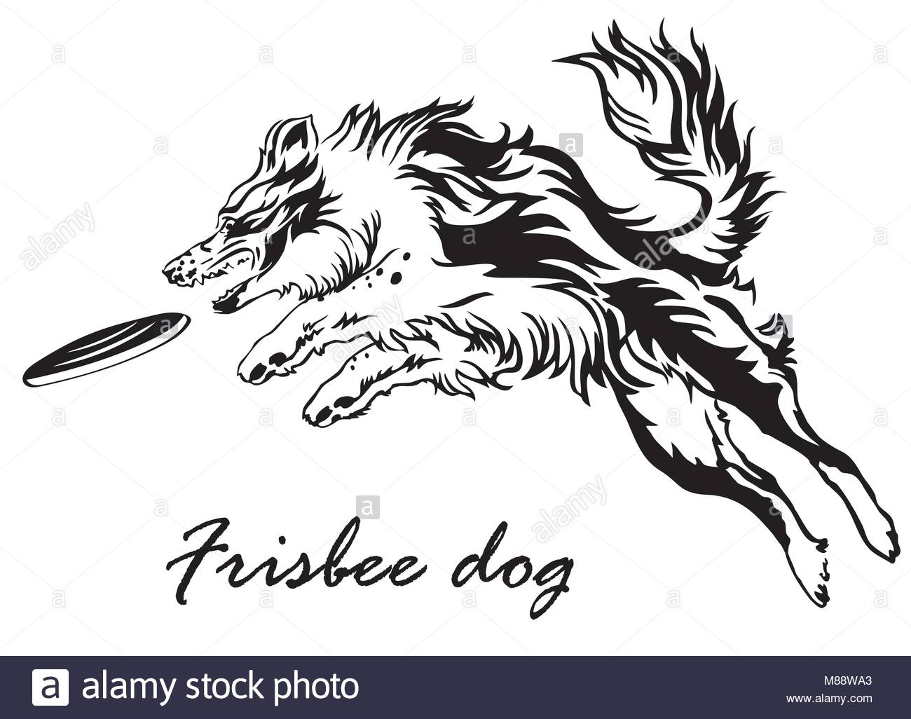1300x1026 Border Collie Stock Vector Images