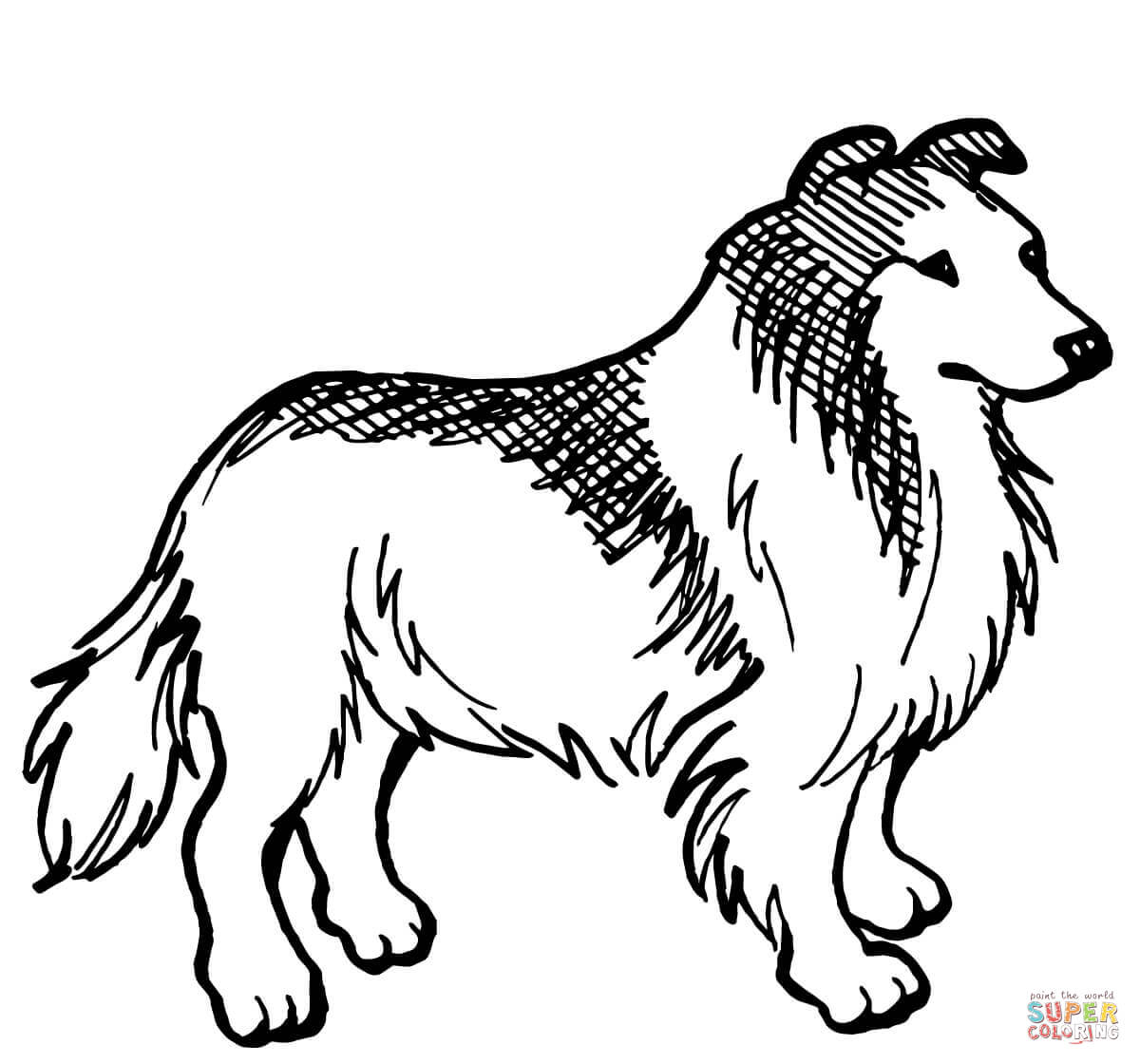 1200x1120 Border Collie Coloring Page Free Printable Coloring Pages