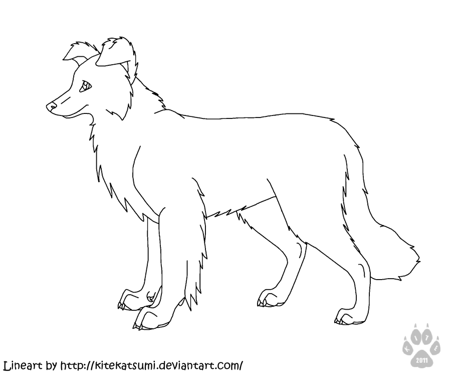 900x751 Collie Coloring Pages Print Border Collie Coloring Pages