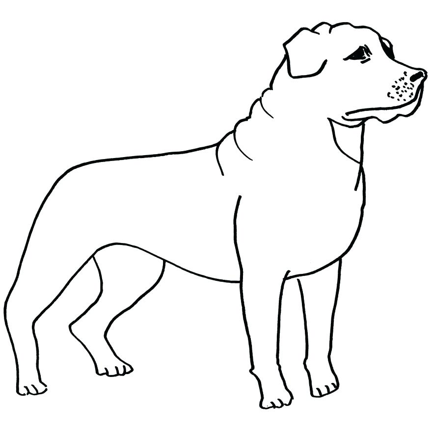 878x878 Border Collie Coloring Pages