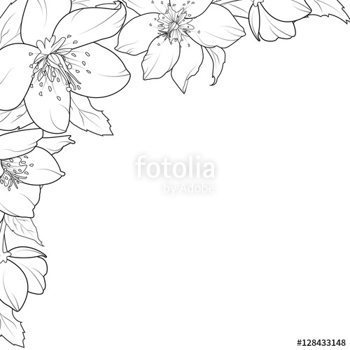 500x500 Christmas Rose Hellebore Flowers Corner Edge Frame Border Element