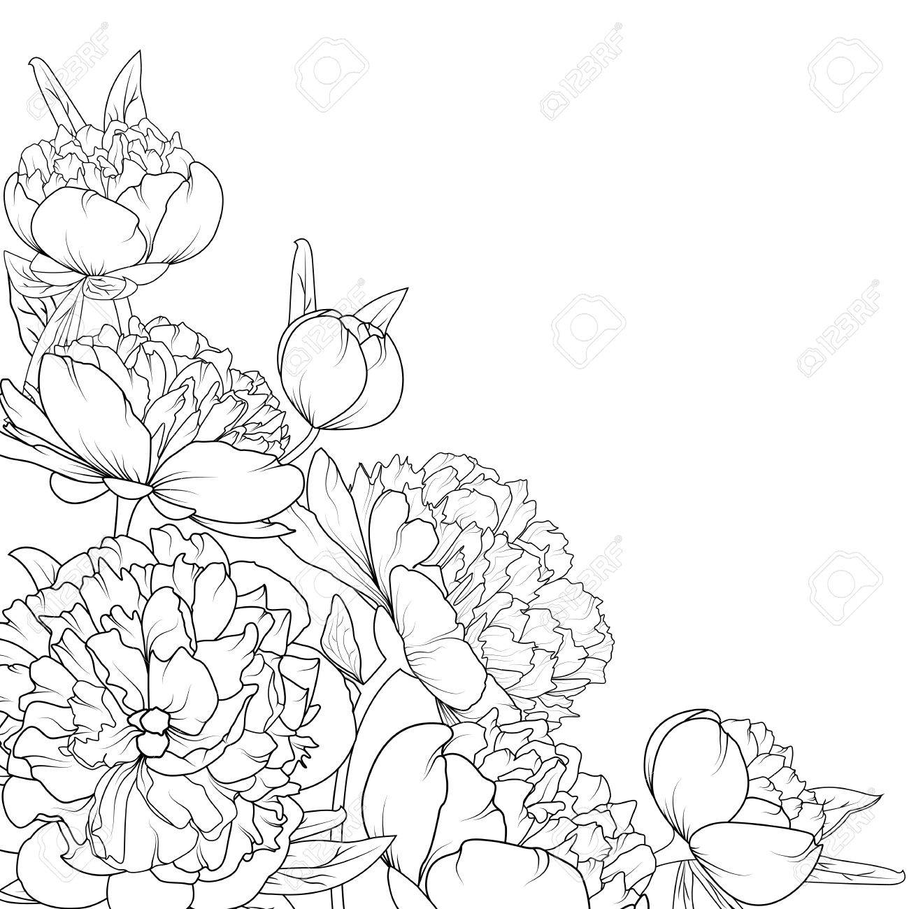 1300x1300 Peony Rose Garden Spring Summer Flowers Black And White Detailed