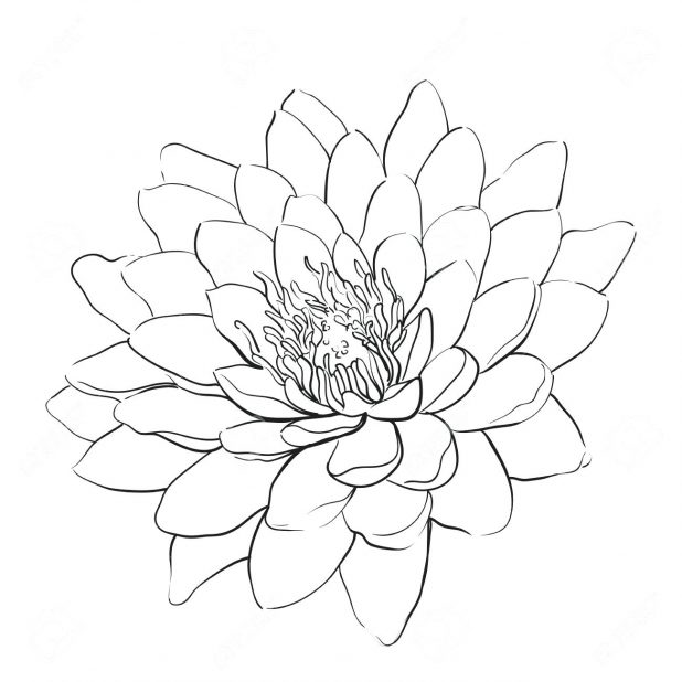 618x618 Coloring Pages Extraordinary Outline Of Flowers. Outline Flowers