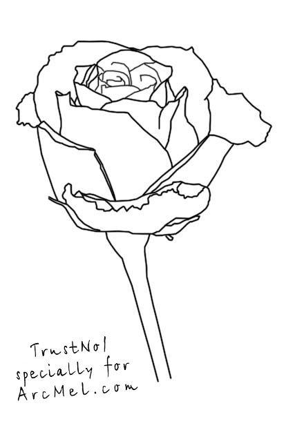 411x620 How Draw A Rose Step 5 Art Beluga Whale, How