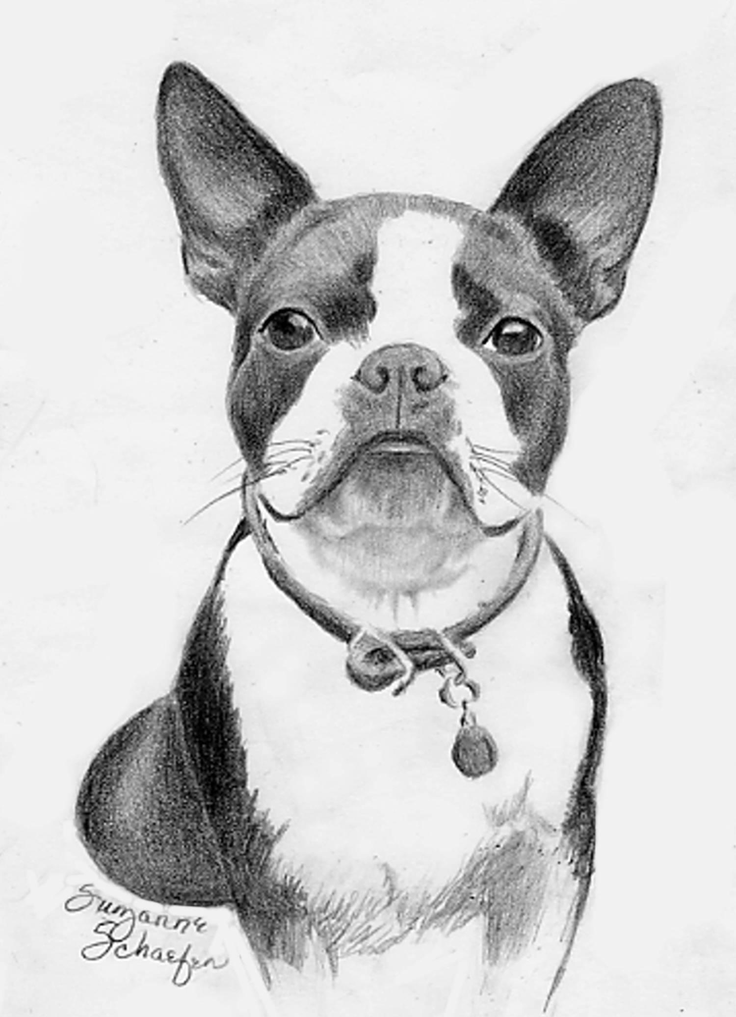 1500x2072 Boston Terrier Drawing Boston Terrier My Boston Terrier