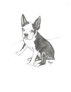 232x300 Boston Terrier Drawings