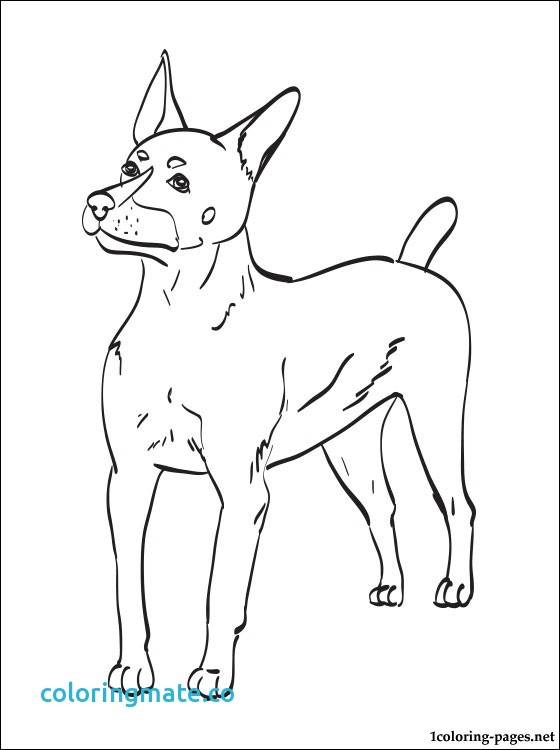 560x750 31 Boston Terrier Coloring Page