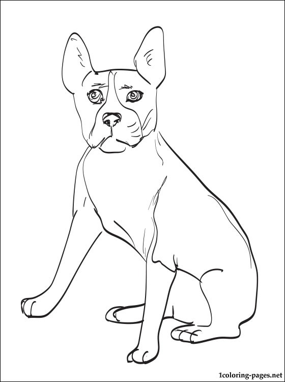 560x750 Boston Terrier Coloring Page Coloring Pages