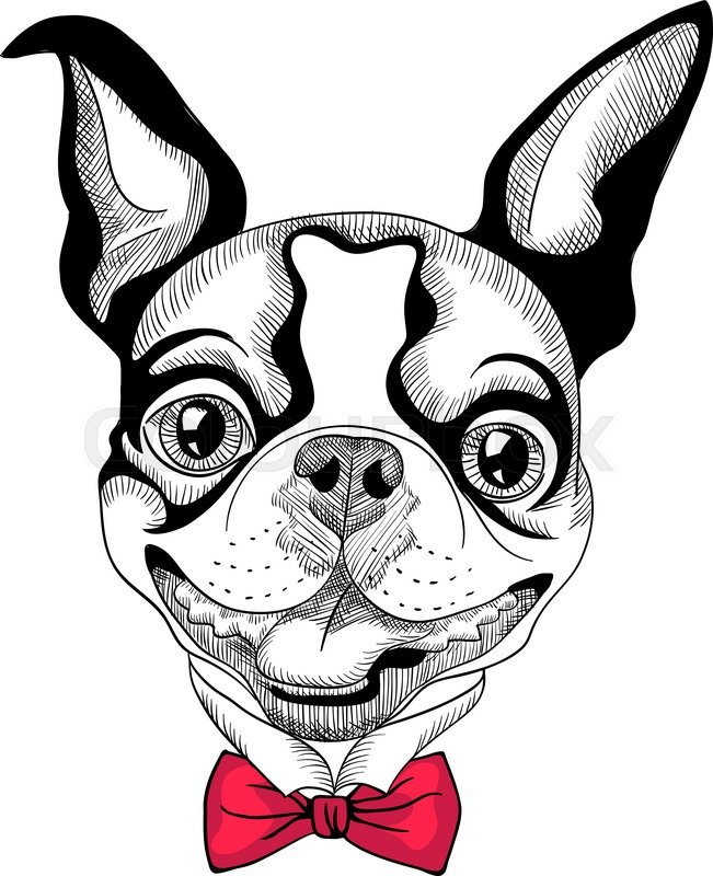 651x800 Funny Cartoon Hipster Boston Terrier Breed Smiling Stock Vector