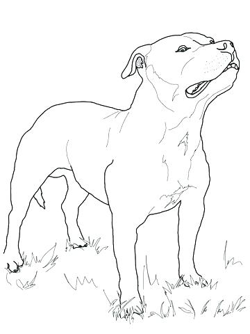 360x480 Amazing Boston Terrier Coloring Page And Terrier Coloring Page