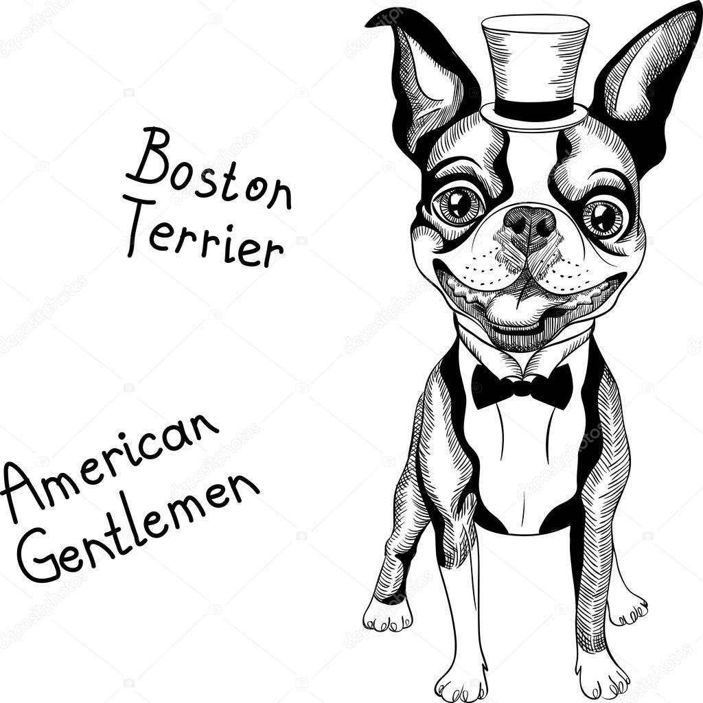 1024x1024 Funny Cartoon Hipster Boston Terrier Breed Smiling Stock Vector