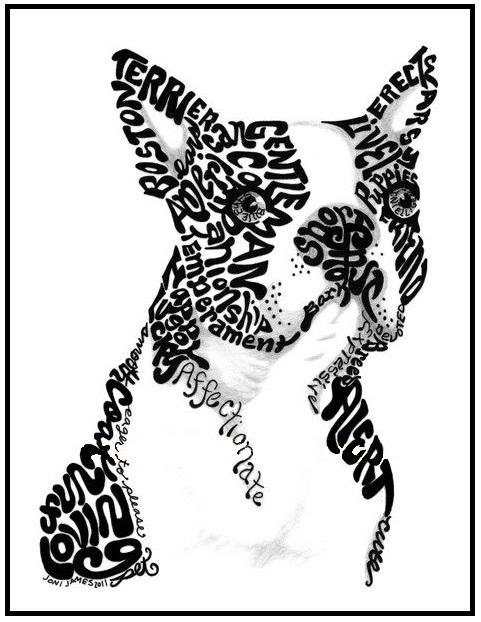 481x622 Bt In Words Boston Terrier Terrier, Boston Terrier
