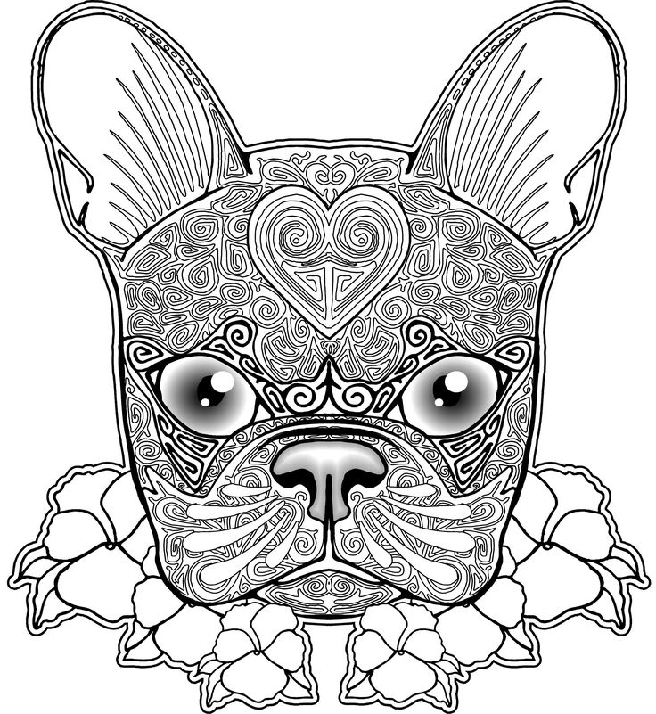 736x801 Boston Terrier Coloring Pages