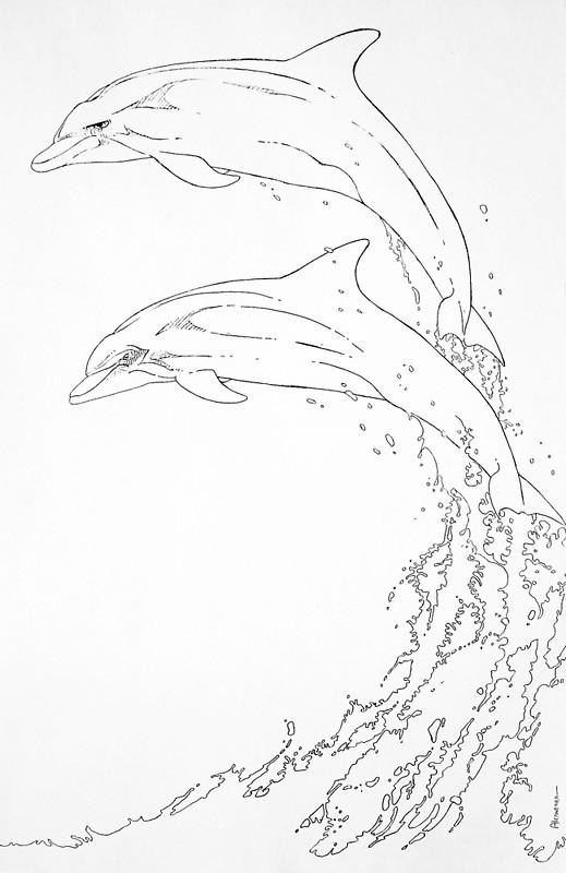 519x800 Dolphins Jumping Posters By Juan Alcantara Redbubble