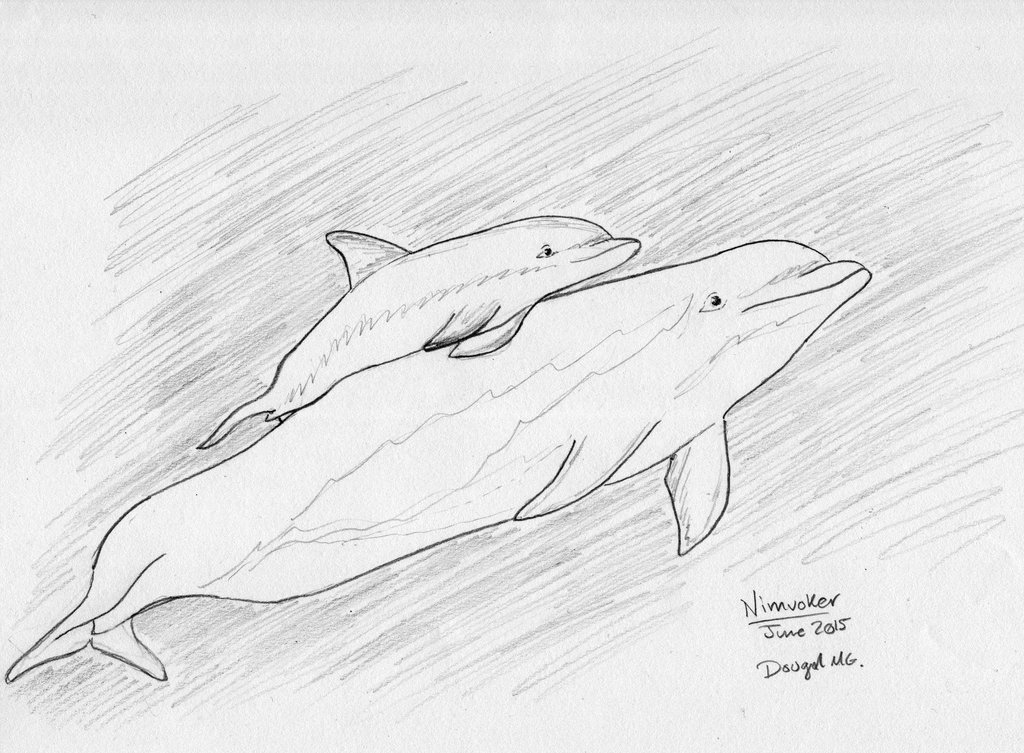 1024x753 Mama And Baby Dolphin Sketch