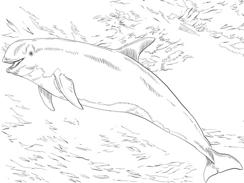 480x360 Risso's Dolphin Coloring Page Free Printable Coloring Pages