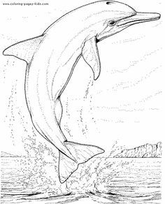 236x292 Bottlenose Dolphin Coloring Page Coloring Page For Kids