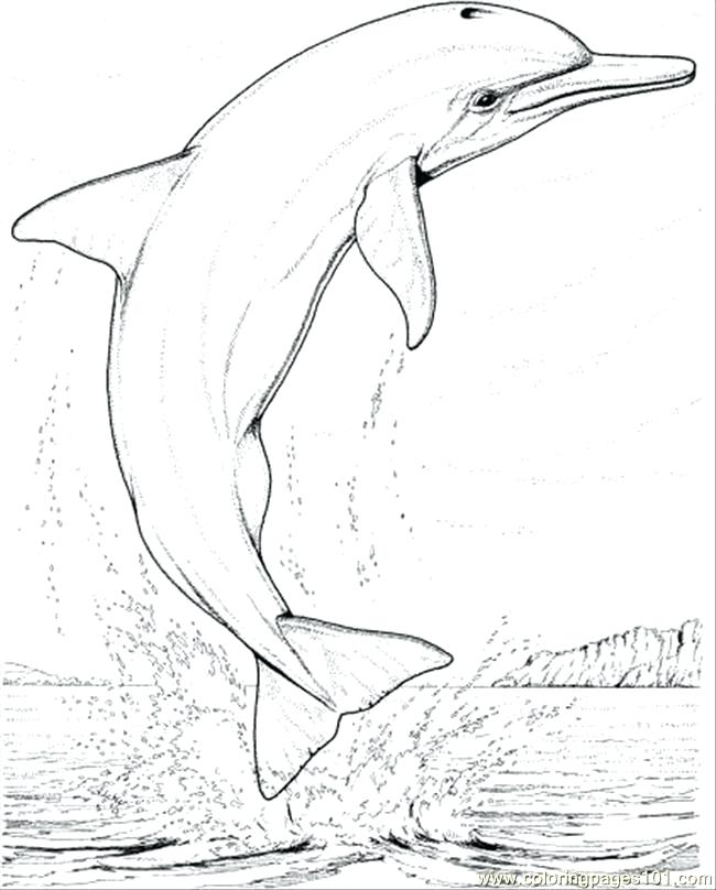 650x808 Coloring Page Dolphin Synthesis.site
