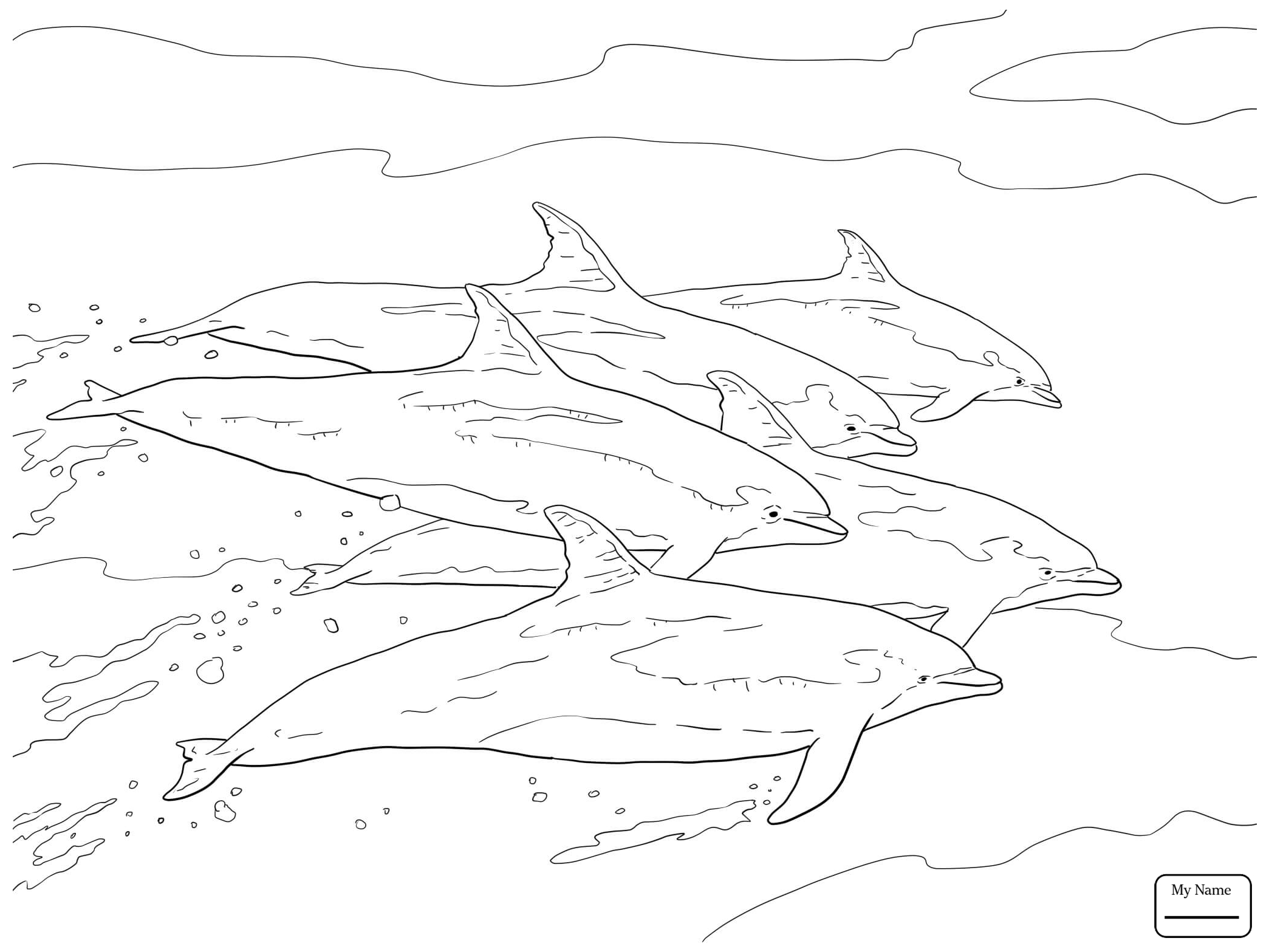 2089x1567 Coloring Pages Bottlenose Dolphin Dolphins Mammals