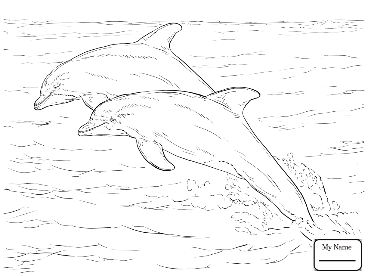 1223x917 Coloring Pages Bottlenose Dolphin Dolphins Mammals