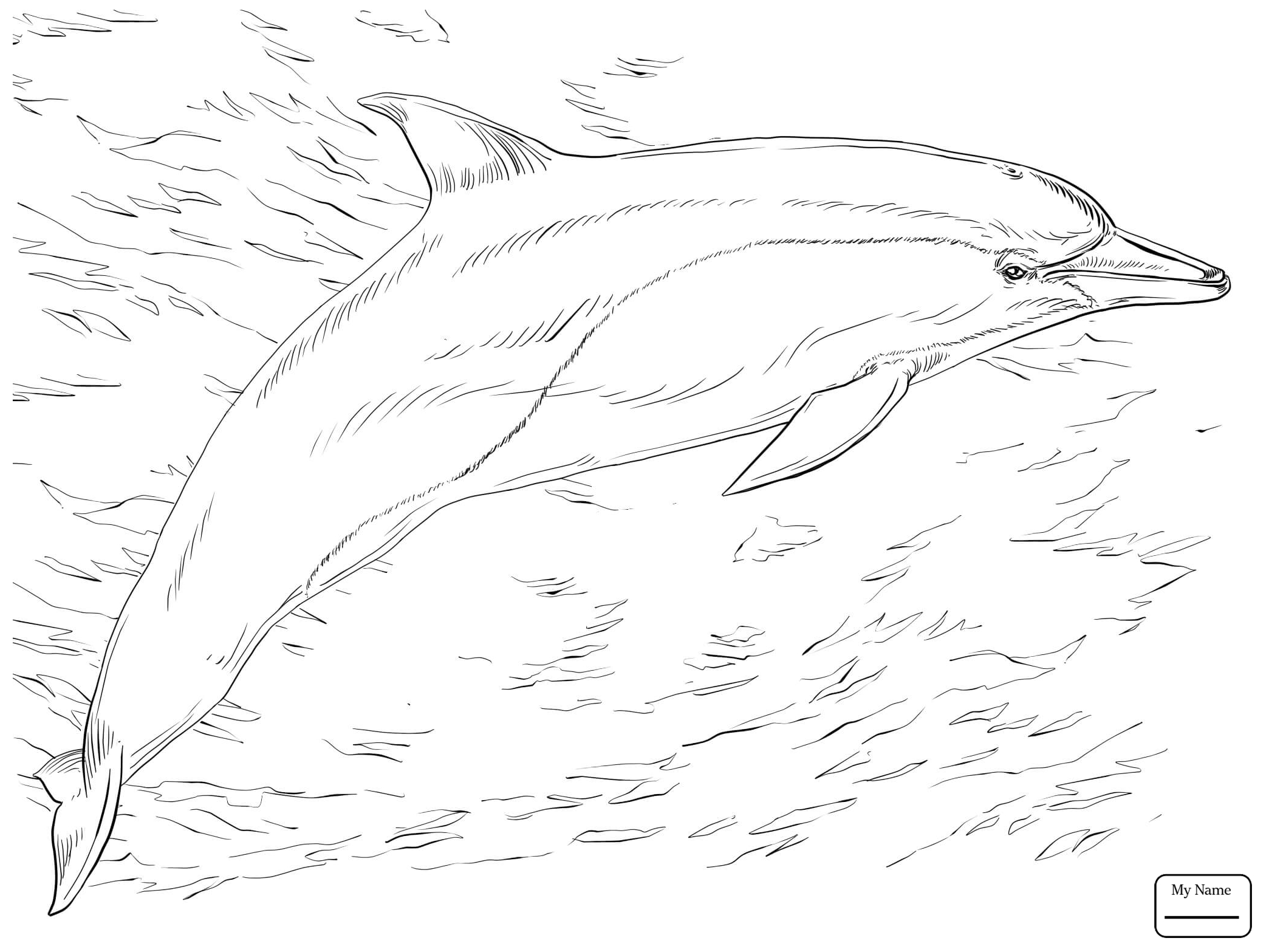 2089x1567 Coloring Pages For Kids Mammals Bottlenose Dolphins School