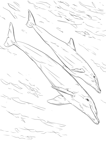 360x480 Bottlenose Dolphins Mother And Juvenile Coloring Page Free
