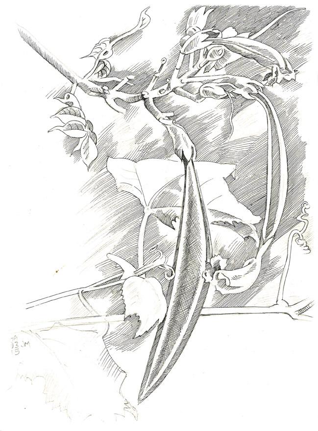 649x877 Drawing